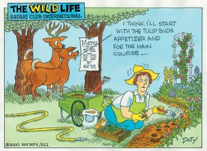 The Classic Problem Deer Are Ruining My Garden Bobbex