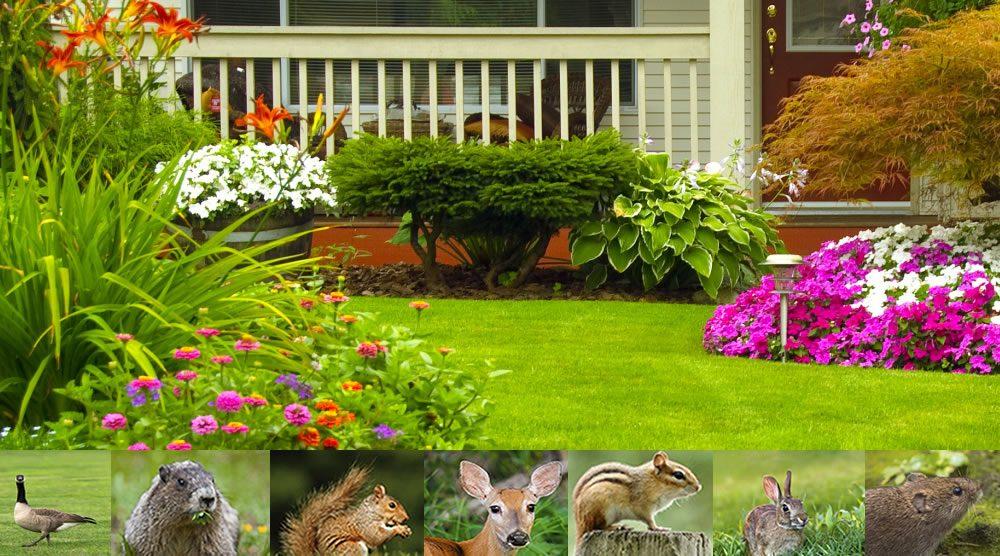 Garden pests in the garden