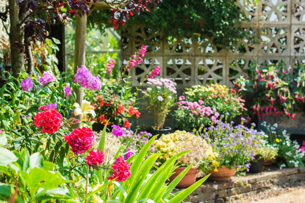 Flowers can thrive in your yard, when you keep them safely protected from deer with Bobbex.
