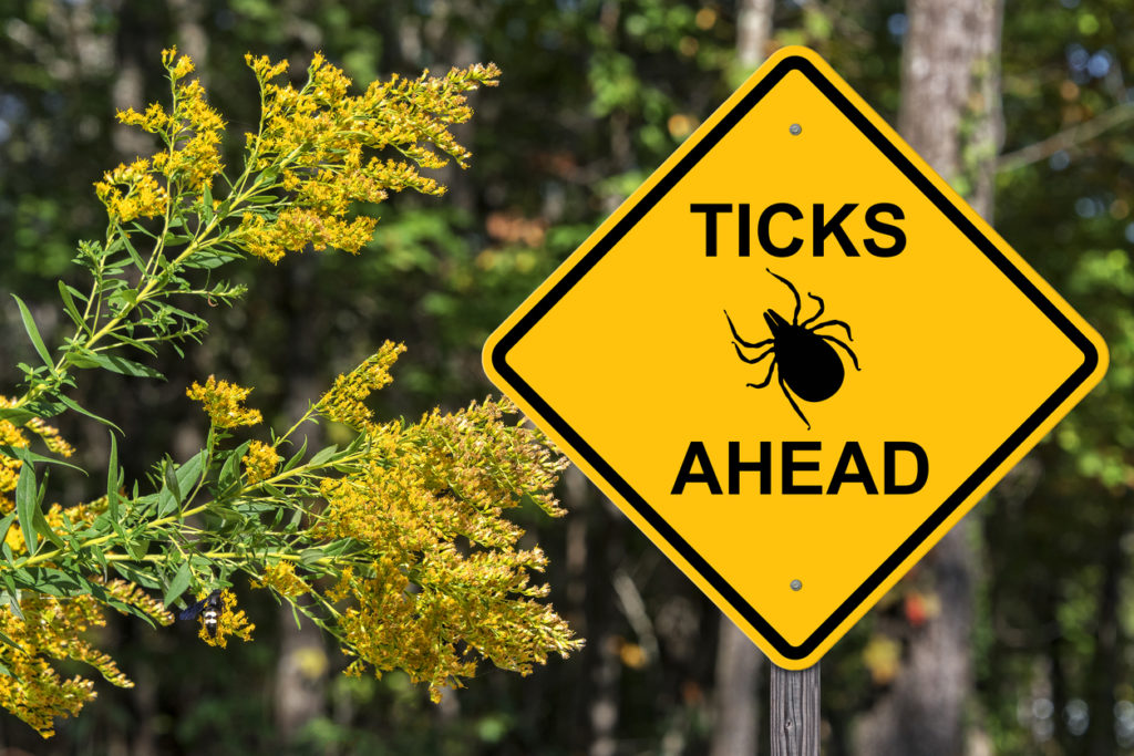 Be aware of ticks and take steps to protect yourself and your gardens against them.