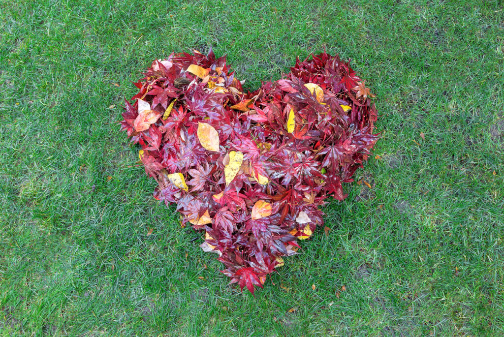 Fallen leaves are pretty to view, but they have an important role in Fall garden clean up as well. They provide nutrients to the soil which fortifies the garden and lawn.